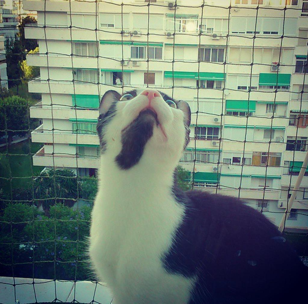 Mi gato Zafú con su malla protectora al fondo | L.C.